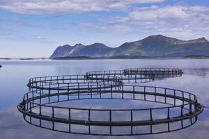 Er norske regler om eierskapsbegrensning i strid med EØS-reglene?