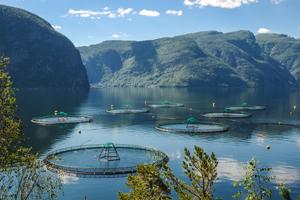 Havbruk i norsk fjord