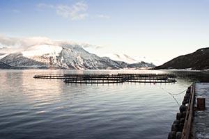 Fiskeoppdrett_shutterstock_130543964