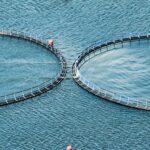 Fiskeoppdrett_shutterstock_150270800